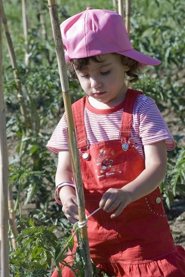 Sostegni e legature per i pomodori