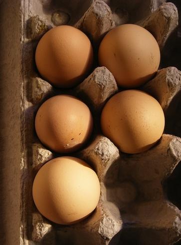 Il tuorlo d'uovo e l'avidina nell'albume