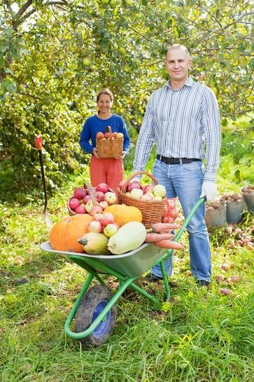 Lavori nel frutteto in ottobre
