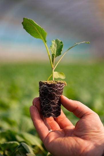 Trapianti e semine