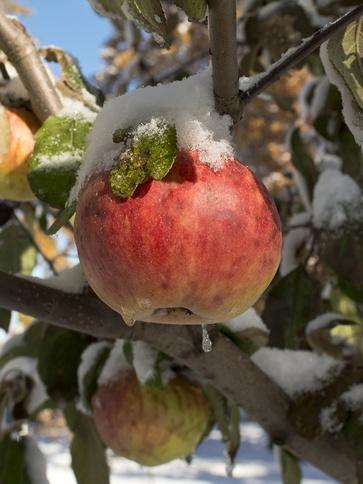 I lavori nel frutteto a dicembre