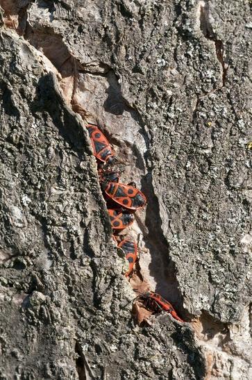 Tecniche per salvaguardare gli alberi