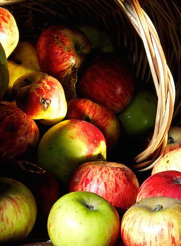 La mela rotella e la mela casciana