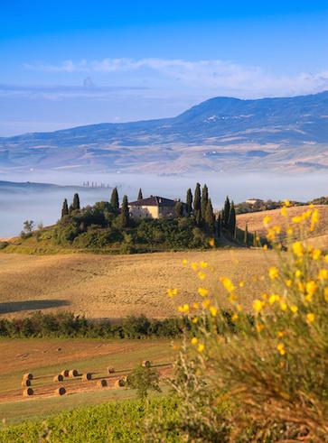 Le piante officinali spontanee della Toscana