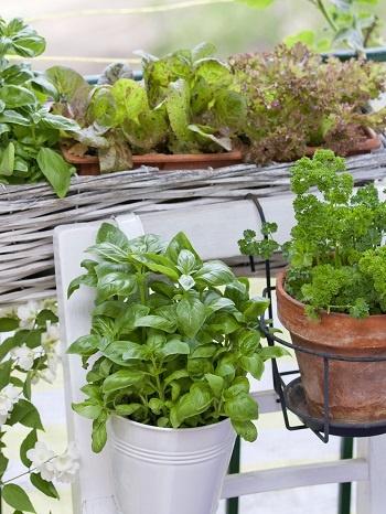 Metodo della consociazione: come abbinare le piante