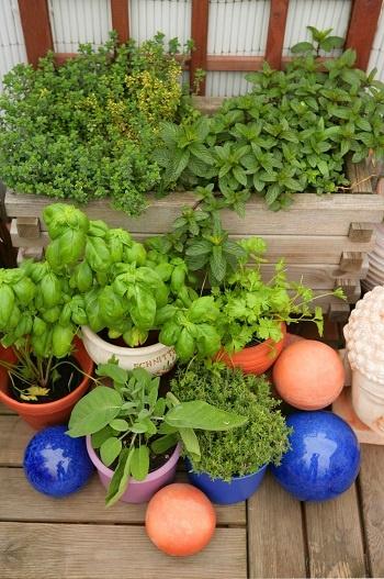 Tante piante aromatiche sul balcone