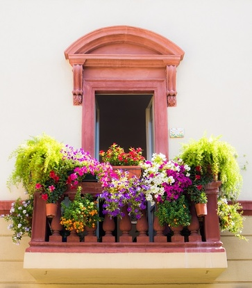 Piante da fiore: da vedere e da gustare