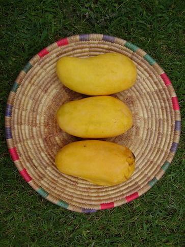Il mango bianco malese