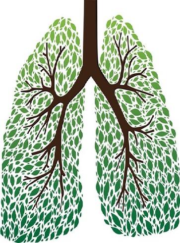 Tisane per i disturbi respiratori