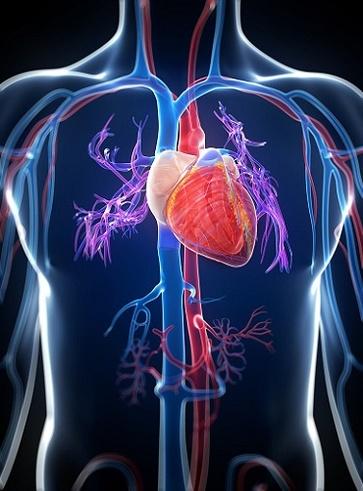 Tisane per i disturbi cardiovascolari