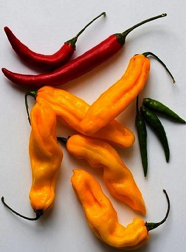 5 varietà di peperopncino