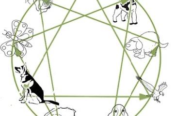 L'Enneagramma: quale animale totemico sei?