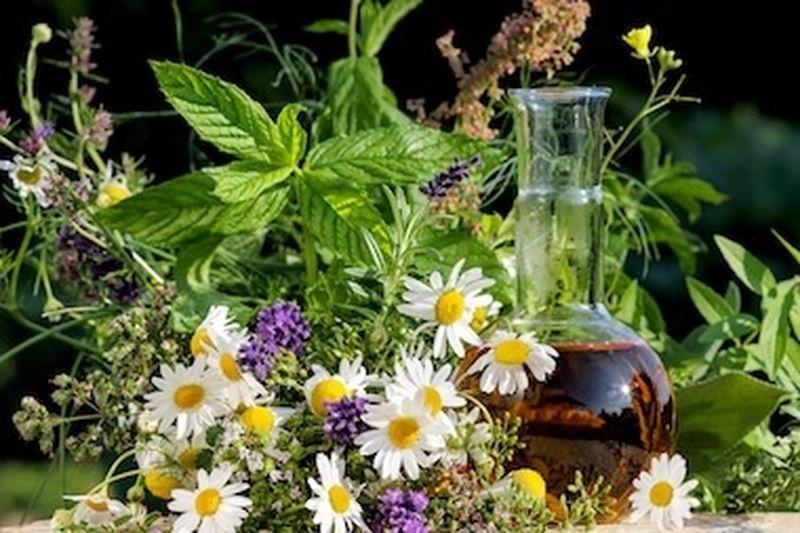 Naturopatia, discipline bio-naturali e la nuova Legge sulle professioni non regolamentate