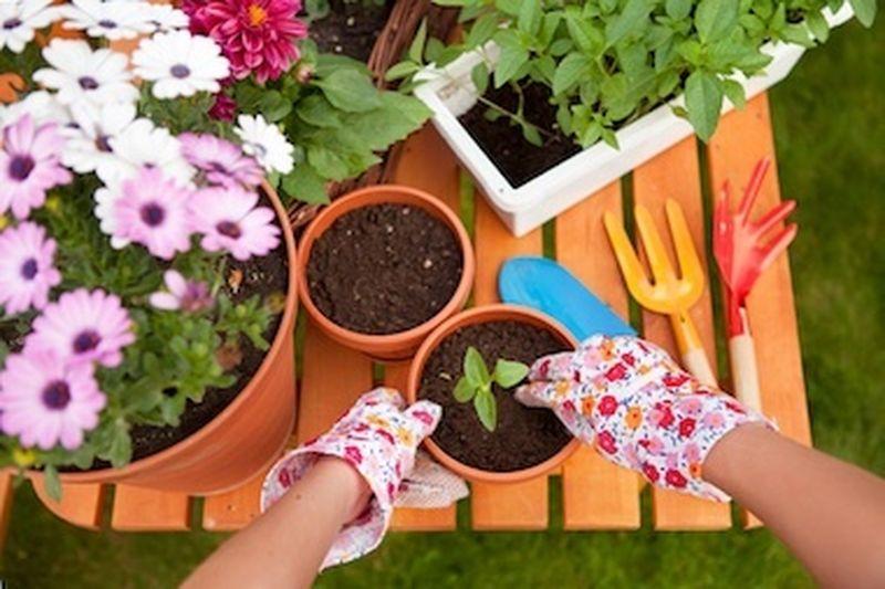 Il fertilizzante naturale fai-da-te
