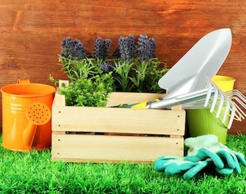 Salvare il pianeta partendo dall'orto e dal giardino