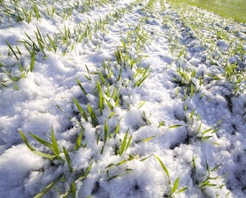 Come proteggere le piante e le erbe dal freddo