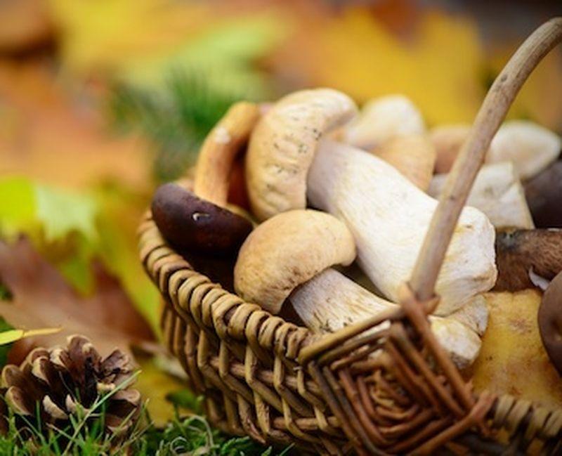 I funghi, scudi naturali per l'inverno