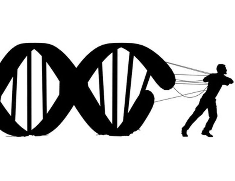 Epigenetica: come stress, cibo, movimento ci mutano