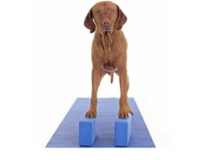 Esercizi yoga con i blocchi