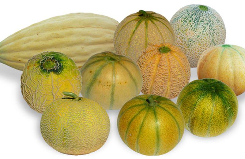 I meloni antichi e dimenticati