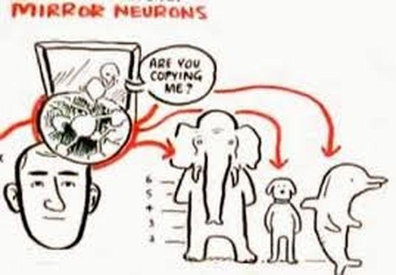 Danzamovimentoterapia, movimento e neuroscienze