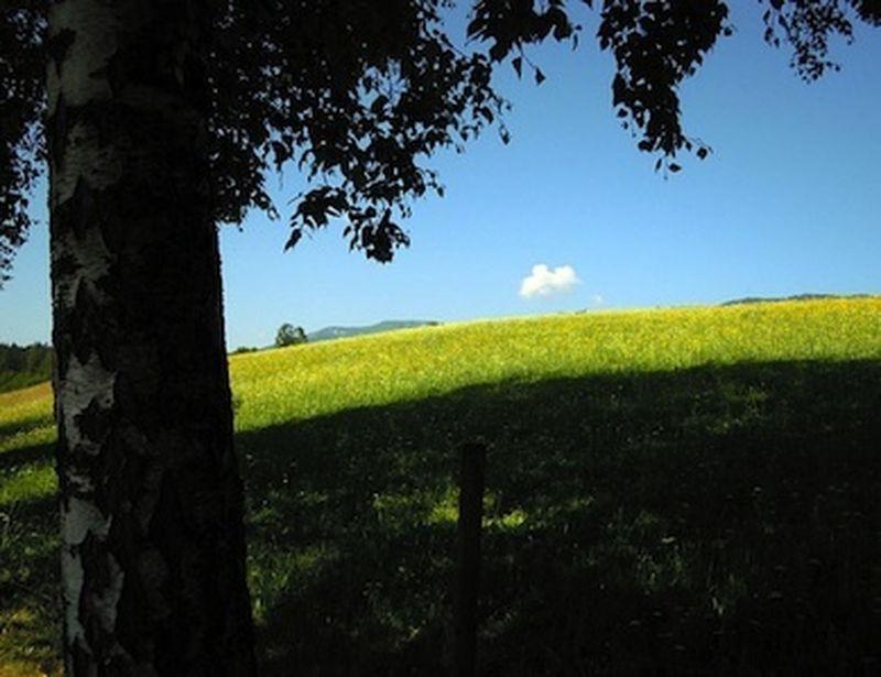 Alchechengi e corniolo, frutti dimenticati dell'estate