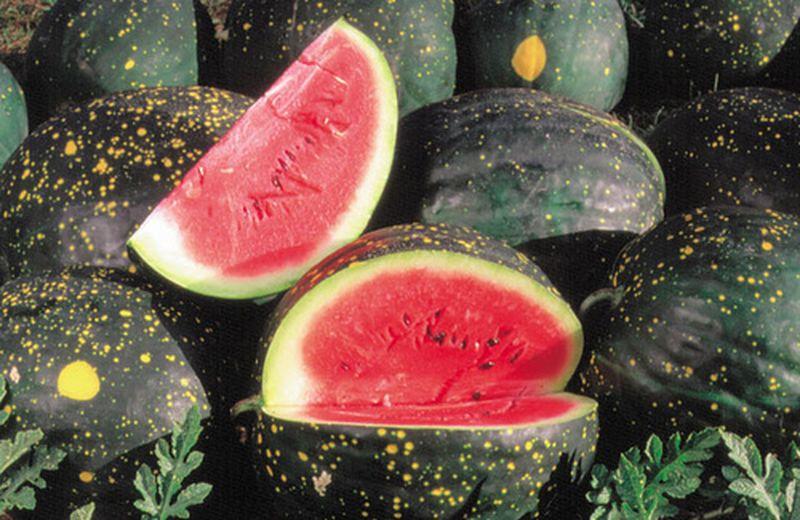 Frutti dimenticati: le angurie stravaganti