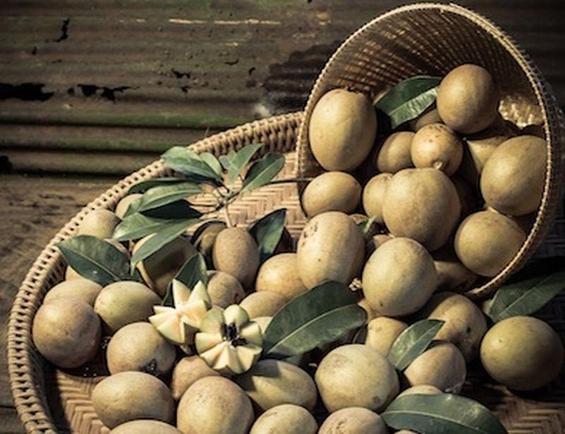 Sapodilla, benefici e usi del frutto dell'albero della gomma