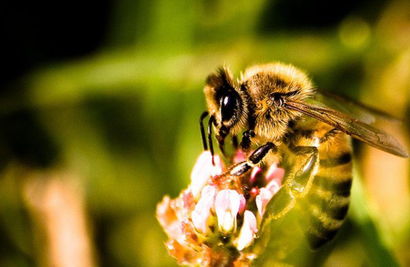 Bellezza dolce con la cosmesi naturale a base di miele