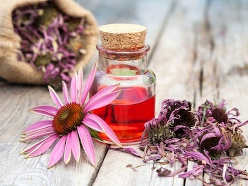 L'echinacea: un rimedio per la cistite