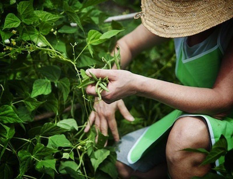 Agricoltura biologica in Italia, crescita in controtendenza