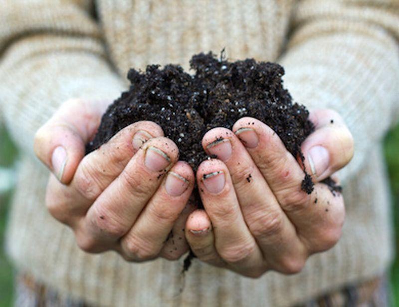 Compost fai da te: utile e senza sprechi