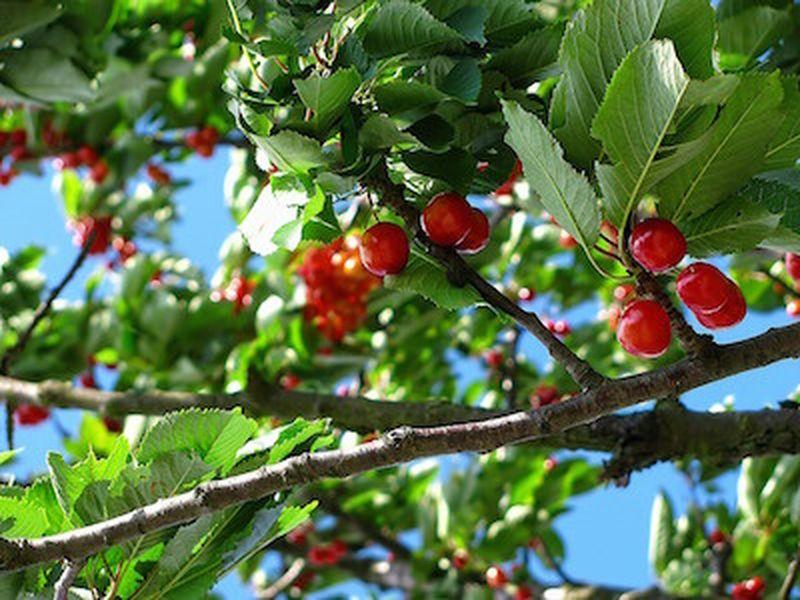 Frutta di primavera, frutta golosa