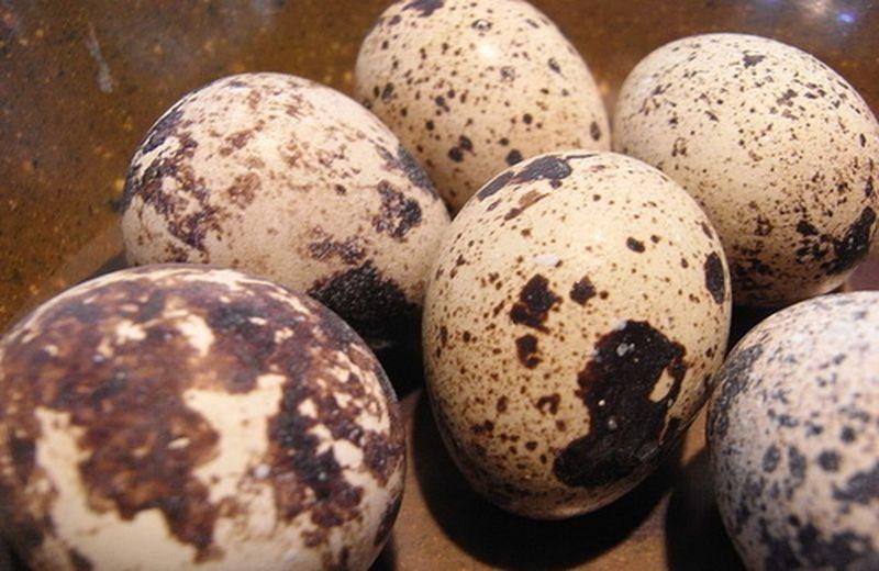 Uova di coturnice contro le allergie stagionali