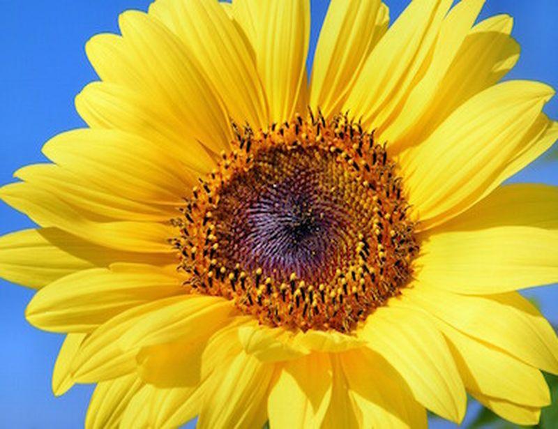 Vitamina D, effetti della carenza e dell'eccesso