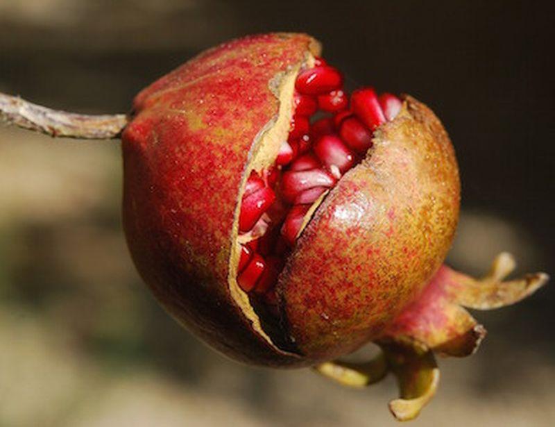 Melograno, il frutto esotico dalle 1000 proprietà