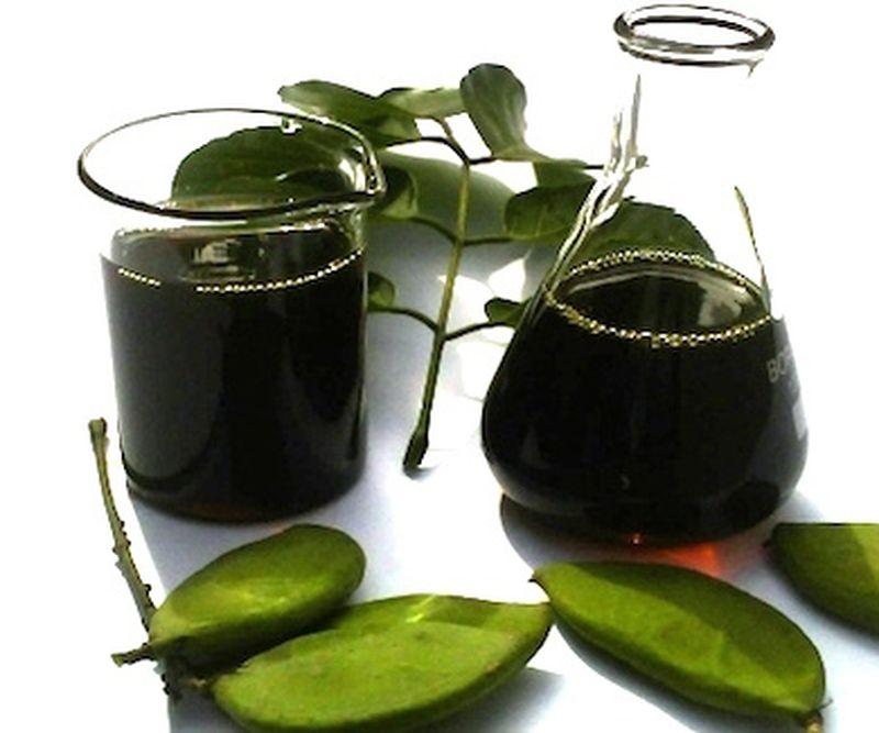 Conosciamo l'olio di karanja