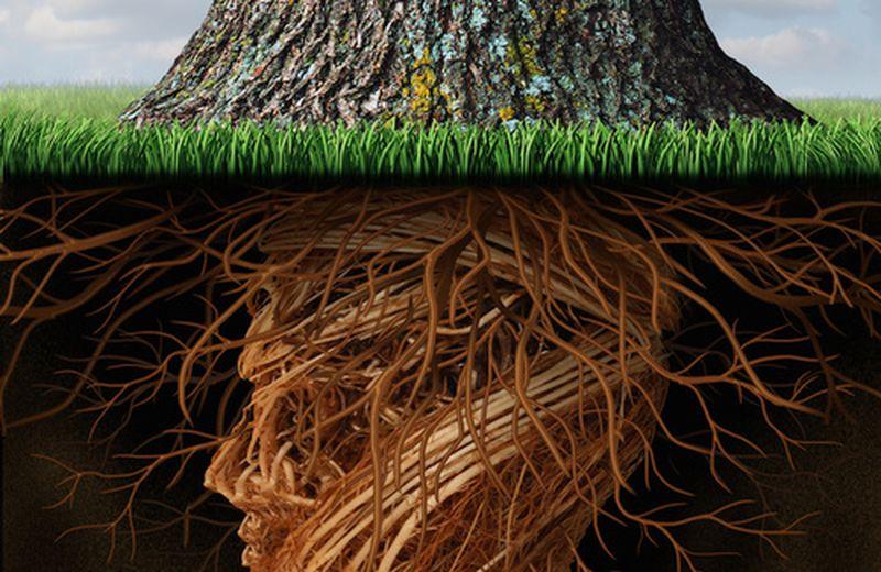 Le piante e la loro intelligenza