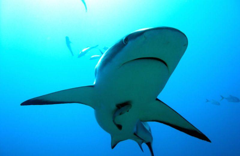 Le discipline psicofisiche, la modernità e gli squali intorno