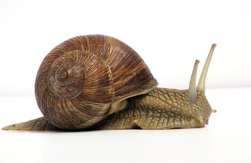 La giornata mondiale della lentezza: 26 marzo 2012