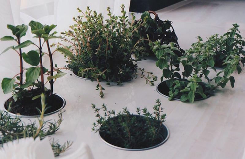 Virtù e proprietà curative delle erbe aromatiche