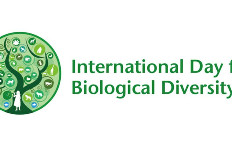 Il 22 maggio è la Giornata internazionale della diversità biologica