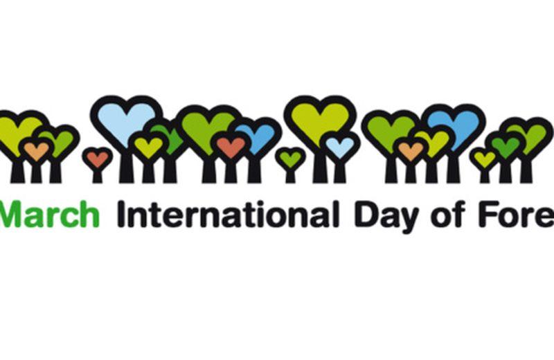 Giornata per le foreste: riflettere sul cambiamento climatico