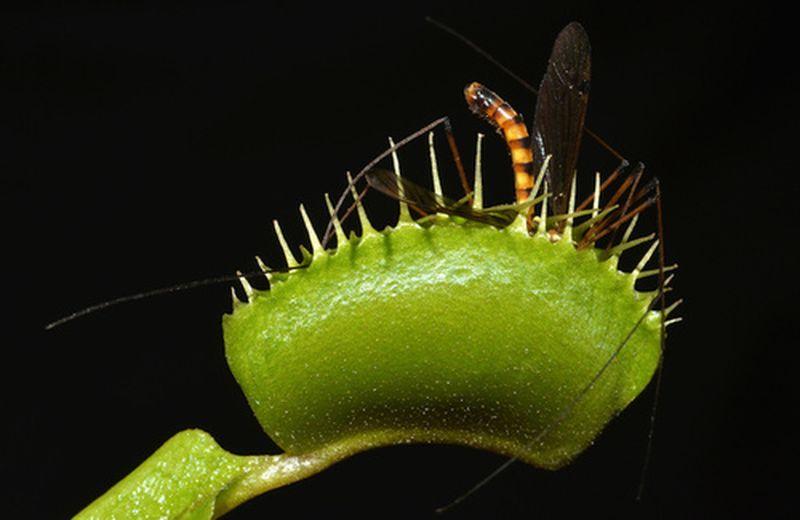 Come fare una trappola ecologica anti zanzare