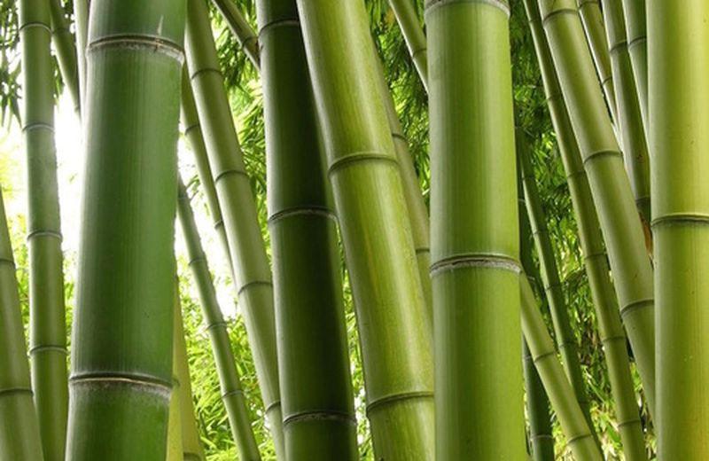 Legno – il primo dei 5 elementi Feng Shui