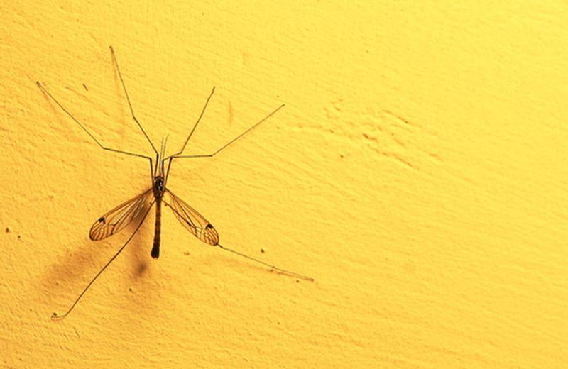 25 aprile, Giornata Mondiale della Malaria
