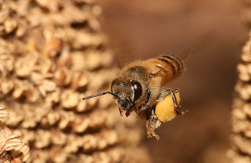 Il segreto della vita in un granello di polline