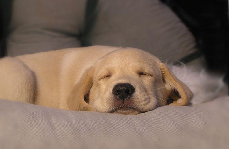 Quanto dormire? Questione di amore per il ritmo