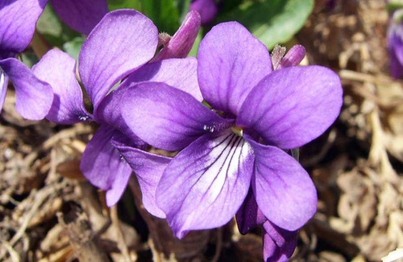 Cromoterapia: il colore viola