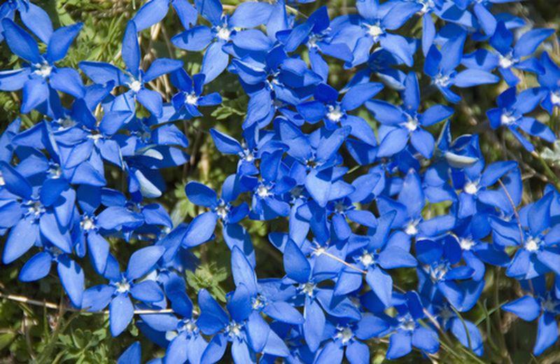 Universo coppia: come i fiori di Bach possono aiutare a risolvere un'eventuale crisi